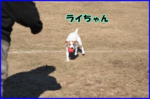DSC_1596_20131205230533f80.jpg