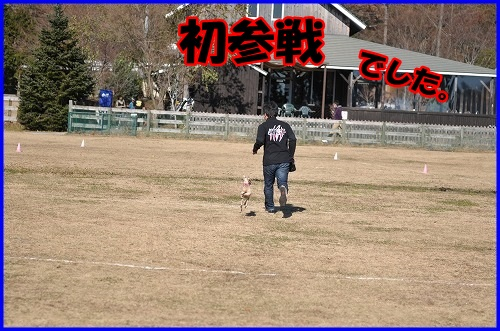 DSC_1633_20131205230646321.jpg