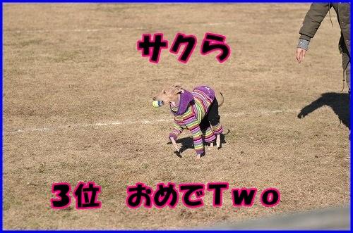 DSC_1686_20131205231024c74.jpg