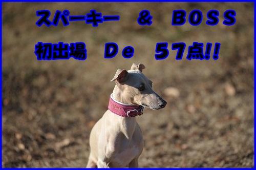 DSC_1702_20131205231100b99.jpg