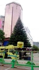 1105tama_tree.jpg