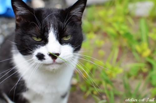 ずぼら猫6