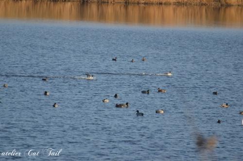 20131103 コムケ湖♪5