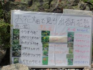 花の看板20130807
