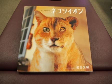 ネコライオン(表)