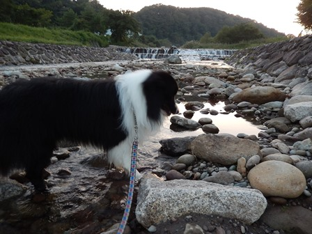川遊びは大好き