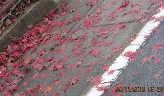 落ち葉散り敷く