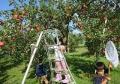 りんご園で遊ぶ