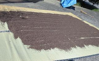 蕎麦の仕上げ乾燥