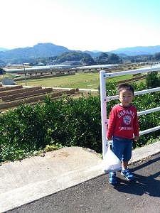 九州は稲刈り