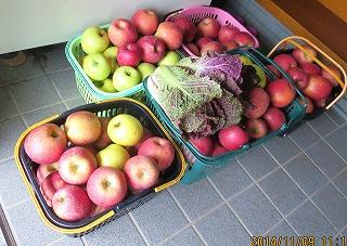 りんご摘み