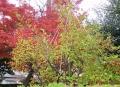 松永の梅もどき