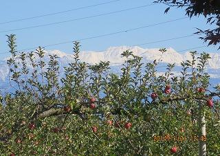 りんご園から立山を望む