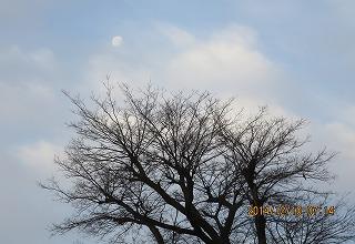 大榎と残月