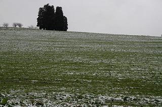 丘の夢牧場の雪