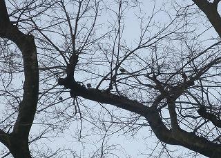 鳥の休み場