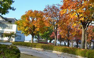 020公園紅葉