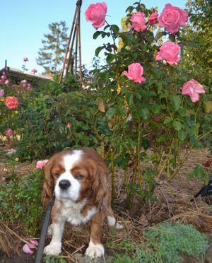 019バラ花壇