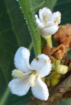 010白い花