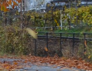 006風に飛ばされる葉