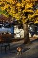 012銀杏の木