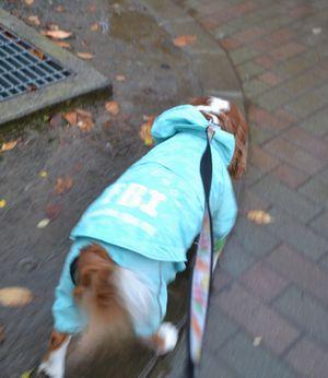 001雨降り散歩