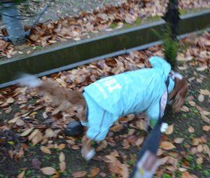 002雨降り散歩