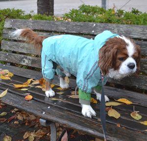 003雨降り散歩