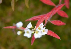 023白い花