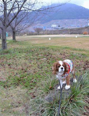 001緑地公園