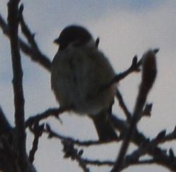 001小鳥