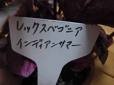 shukusho-RIMG2582.jpg
