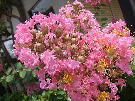 shukusho-RIMG2662.jpg