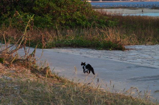 走る仔猫2