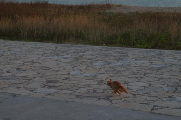 走る仔猫3