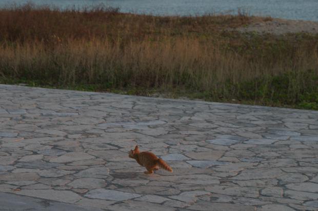 走る仔猫4