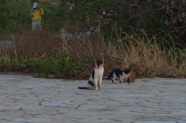 走る仔猫6