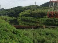 IMG_0223.jp g