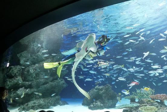 サメ抱っこ