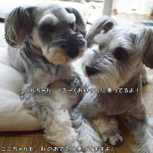 coconon_のんちゃんと