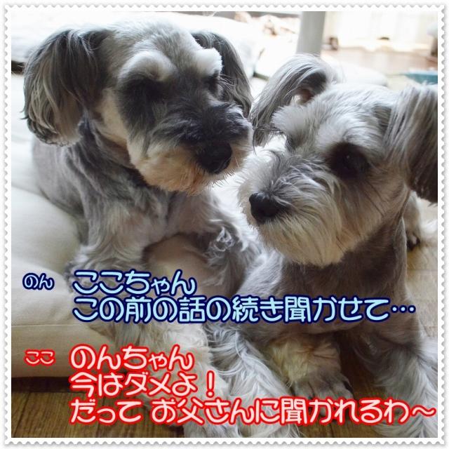 coconon_のんちゃんとの会話