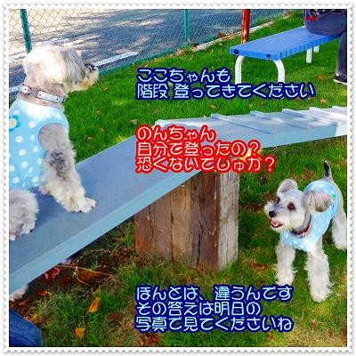 coconon_北本ラン3