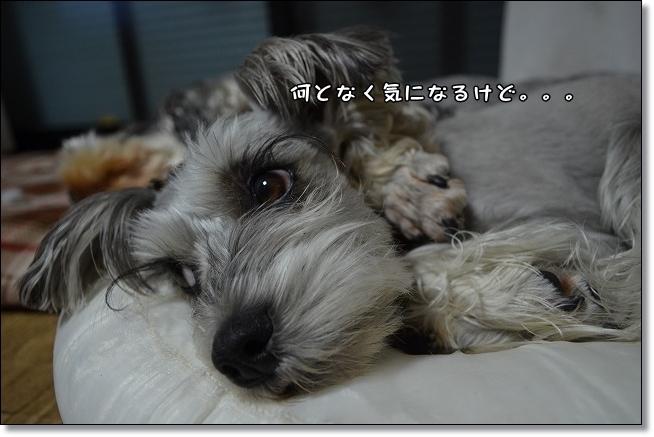 coconon_20130404_15821.jpg