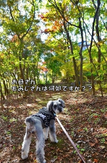 coconon_20131116_24315.jpg