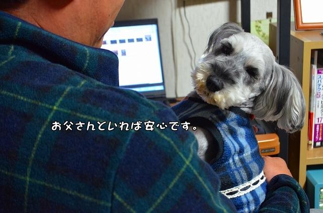 coconon_20131121_24364.jpg