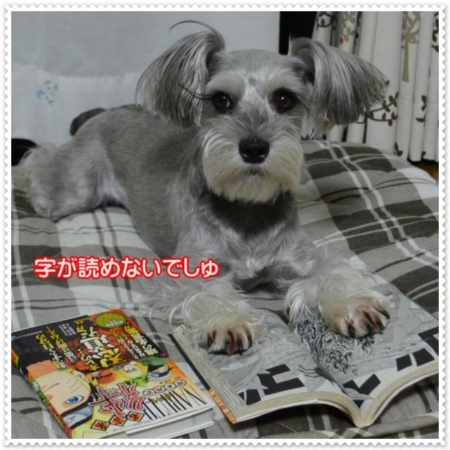 coconon_dokusyonoakicoco.jpg