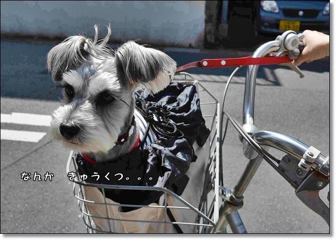 coconon_jitensyanakadai.jpg