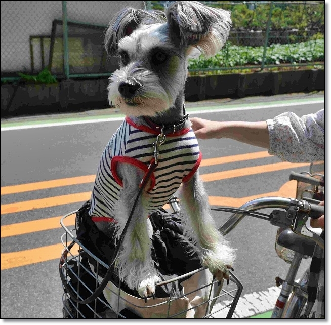 coconon_jitensyanakadai3.jpg