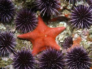 sea-star-wasting-1_85973_990x742_600x450.jpg