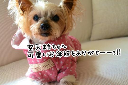 初「のぶれす」さん♪ (6)
